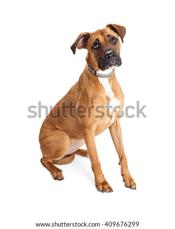 Big dog with sad and lonely expression isolated on white - stock photo