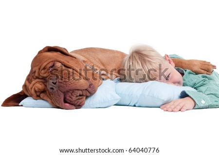 Big dogue de bordeaux and impish boy lying on blue pillows on the floor