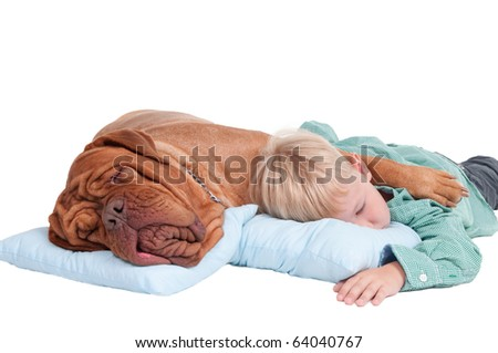 Big dogue de bordeaux and small boy sleeping on blue pillows on the floor