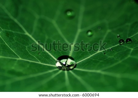 big drop at the center of the leaf