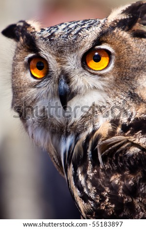 Big eagle owl bird head in closeup