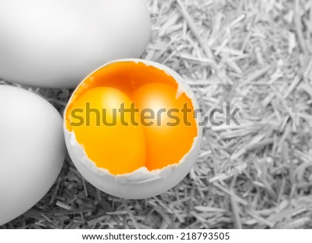 big egg with double yellow isolated straw background