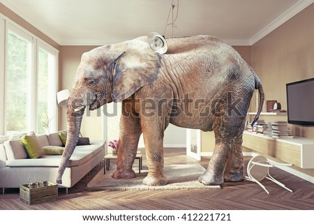 Big elephant and the case of beer  in the living room. Photo combination&cg elements included - stock photo