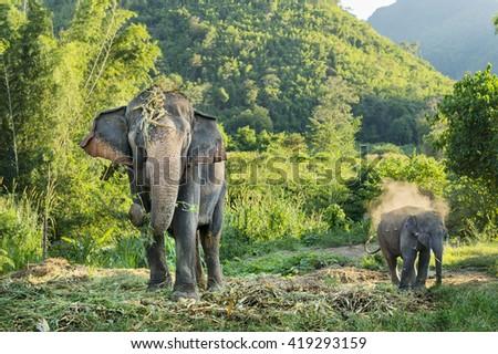 Big elephant eat food  - stock photo