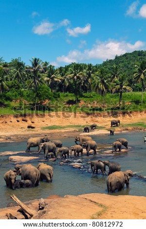 Big elephant herd in the jungles. For more exotic resort images visit http://www.shutterstock.com/sets/65127-sri-lanka.html?rid=714394
