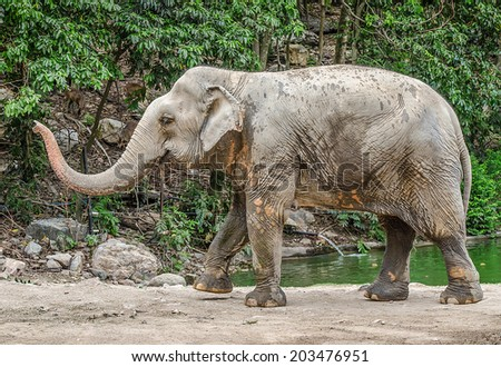 Big elephant in the forest - stock photo