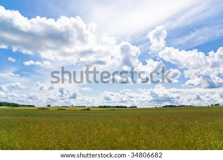 Big field with blue skies and white clouds - stock photo