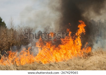 Big fire on agricultural land near forest. Flame and clouds of dark smoke. Distorted details due high temperature and evaporation gases during combustion - stock photo