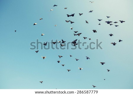 big flock of incredible cute soft focus pigeons on the background blue sky - stock photo