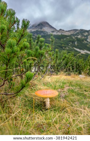 Big fly agaric is under a bush on a background of mountain peaks - Pirin National Park, Bulgaria - stock photo