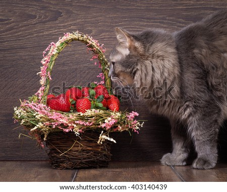 Big gray cat and a basket of strawberries. Cat fluffy. Shopping beautiful. red berries. Background wood  - stock photo