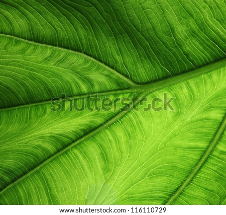 big green leaf - stock photo