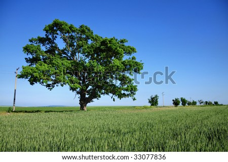 Big green tree and fresh field