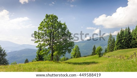 Big green tree standing on grass meadow in mountains - stock photo