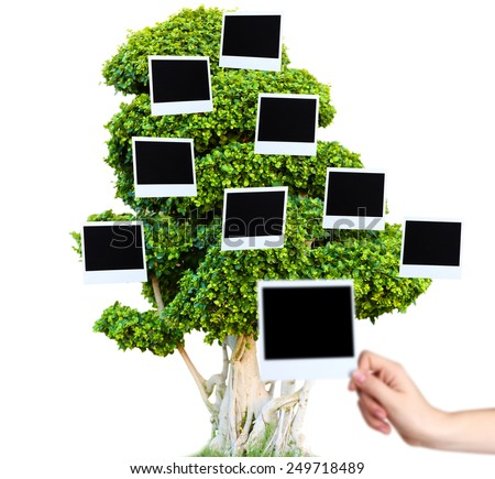 Big green tree with photo cards on it isolated on white - stock photo