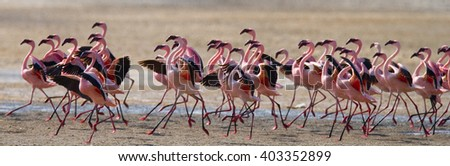 Big group flamingos on the lake. Kenya. Africa. Nakuru National Park. Lake Bogoria National Reserve. An excellent illustration.