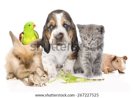 Big group of cute pets. Isolated on white background - stock photo