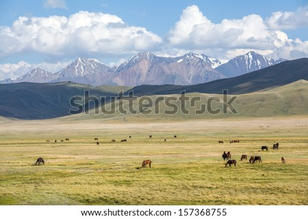 Big group of horses pasturing in mountains - stock photo