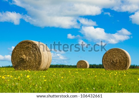 Big hay bay rolls in a green field with yellow flowers and blue sky. - stock photo