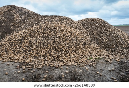 Big heap of previously unharvested potatoes from the previous crop season is mixed with lumps of clay at the edge of the farmland after preparing of the field in the spring for the next growing. - stock photo