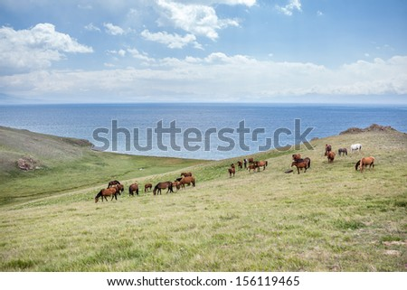 Big herd of horses at the lake Song Kul, Tien Shan, Kyrgyzstan - stock photo