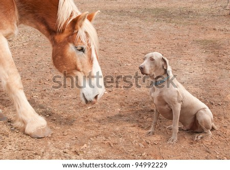 Big horse and a dog - stock photo