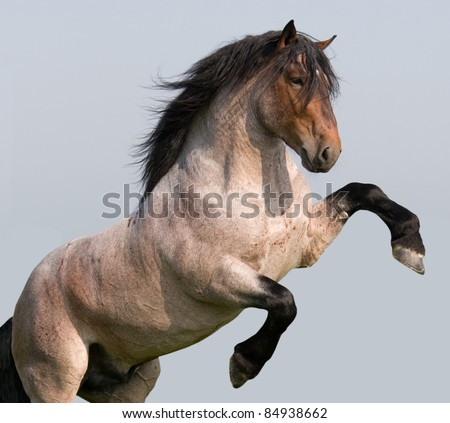 Big horse prancing on blue background - stock photo