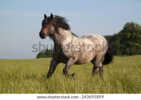 Big horse running along the pasture - stock photo