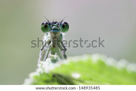 Big insect eyes - stock photo
