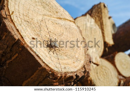 Big insect on the wood - stock photo