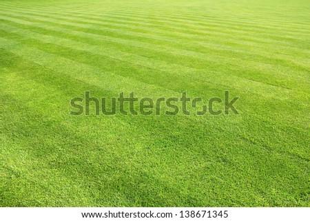 big lawn - stock photo