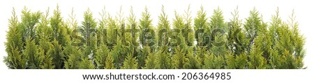 Big Line of the Christmas coniferous prickly evergreen tree branches isolated - stock photo