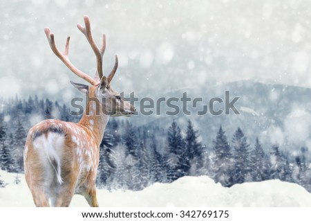 Big male deer on winter mountain backgroundwith snowfalls - stock photo