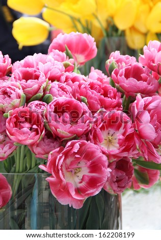 Big mix of amazing flowers in vases in the light room - stock photo