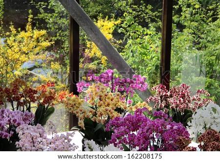 Big mix of beautiful amazing orchids  - stock photo