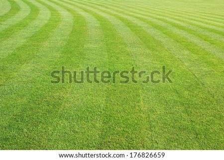 big mowed lawn - stock photo