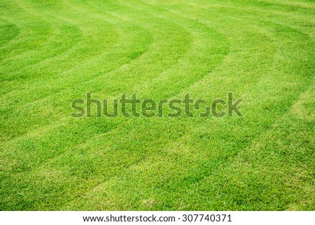 big mowed lawn