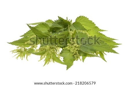 Big nettle herb plant isolated on white background  - stock photo