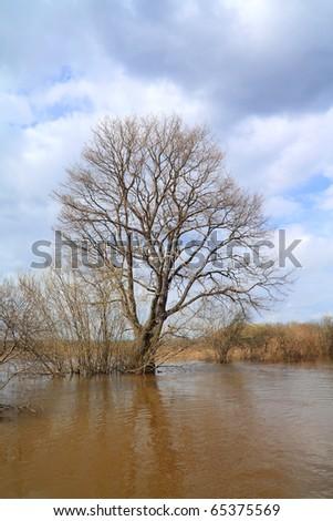 big oak in brown water - stock photo