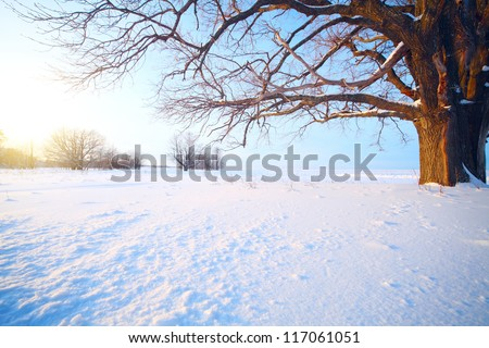 Big oak tree  in a winter snowy field - stock photo