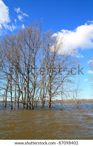 big oaks in brown water - stock photo