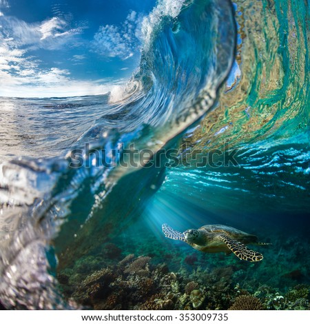 Big Ocean Wave Inside. Sea animal turtle floating underwater. Water surface with ripples on it. Beautiful Maldivian sky with clouds and Rays of Sun. Tropical design element. - stock photo