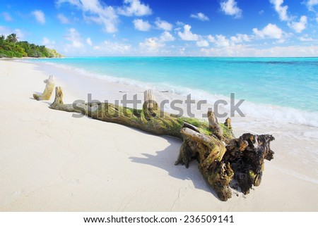 big old log lying in the water at the beach with white sand - stock photo