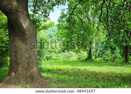 big old oak on glade in park - stock photo