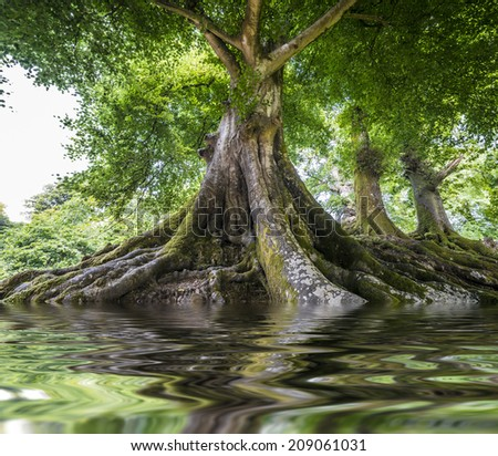 big old tree and a river - stock photo