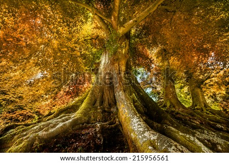 big old tree in autumn time - stock photo