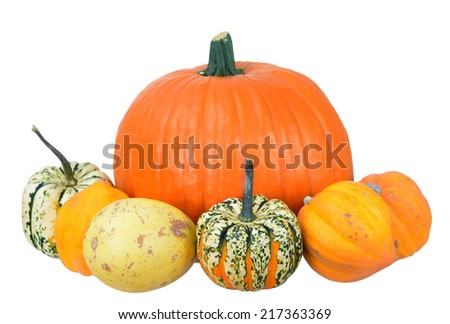big orange pumpkin and squash isolate on white background - stock photo