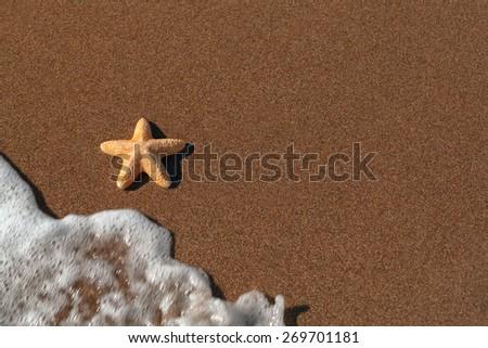 big orange starfish and ripples at the seashore - stock photo