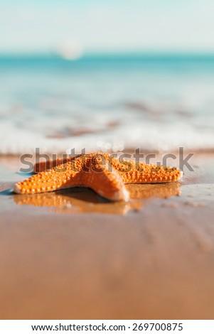 big orange starfish on the seashore. summer concept with copy space. - stock photo