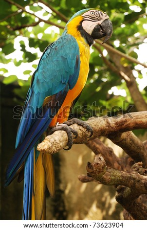 Big parrot (Green wings macaw) on a branch in tropical forest